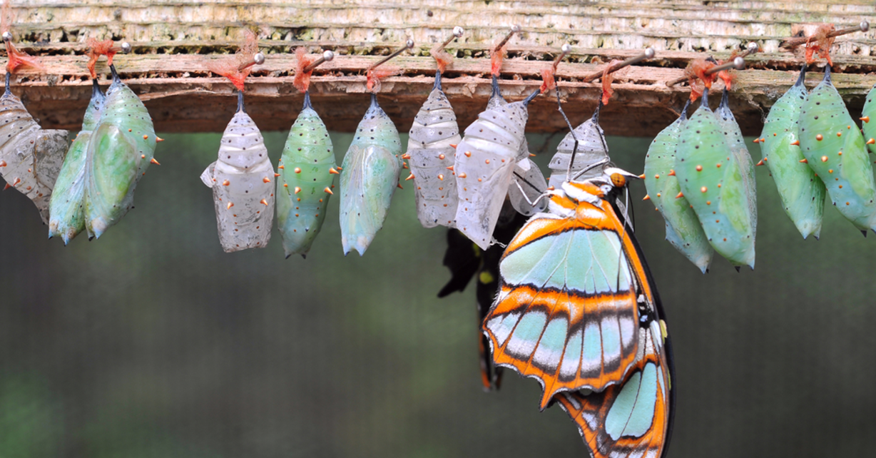 What is Culture Transformation, and how can it assist Operational Excellence